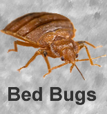 Bed_Bug_Treatment